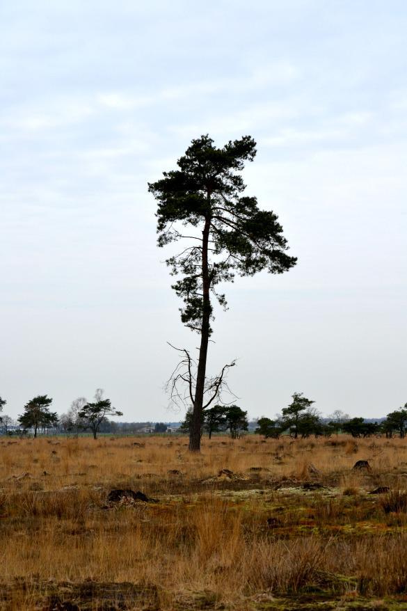 Out In The Heath: Turnhouts Vennengebied