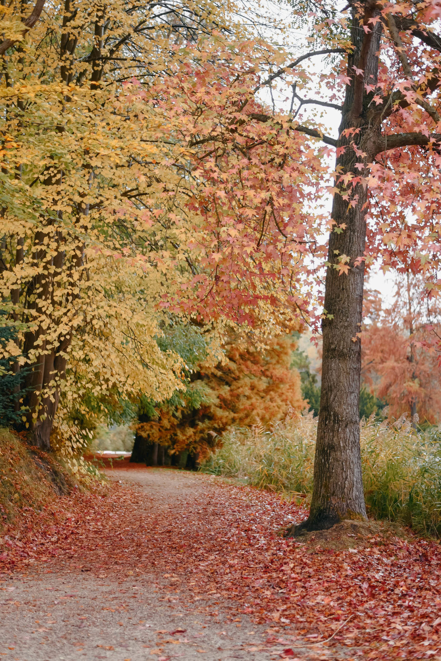 A pathway in Fall near Château de la Hulpe Brussels