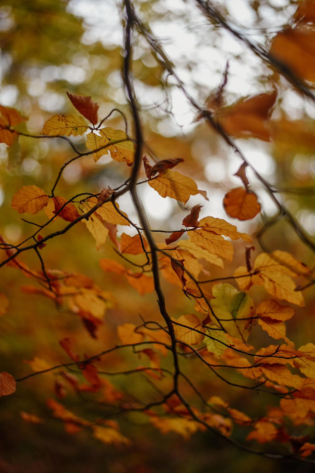Gewestbos Ravels in de herfst