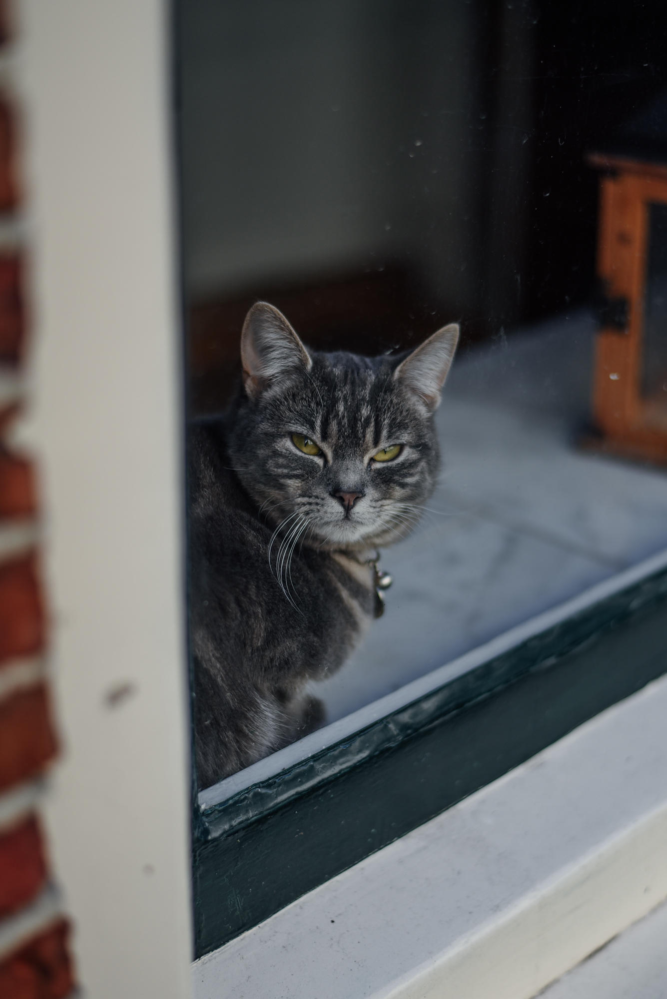 Cat behind a window in The Netherlands