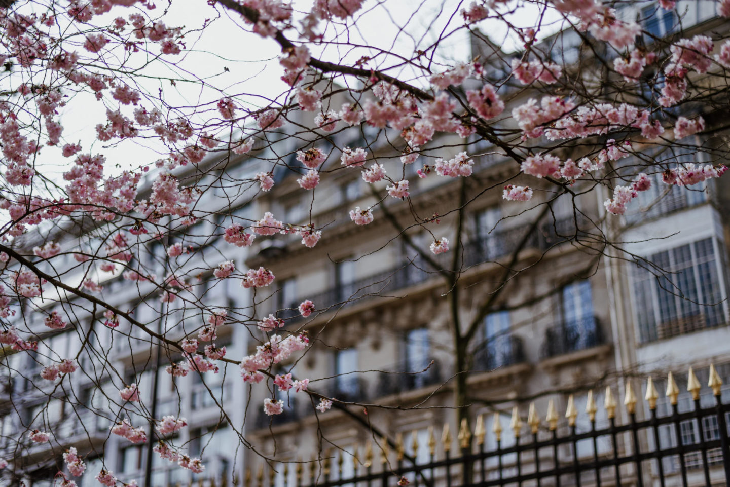 Spring Blossoms in Jardin De Luxembourg Paris
