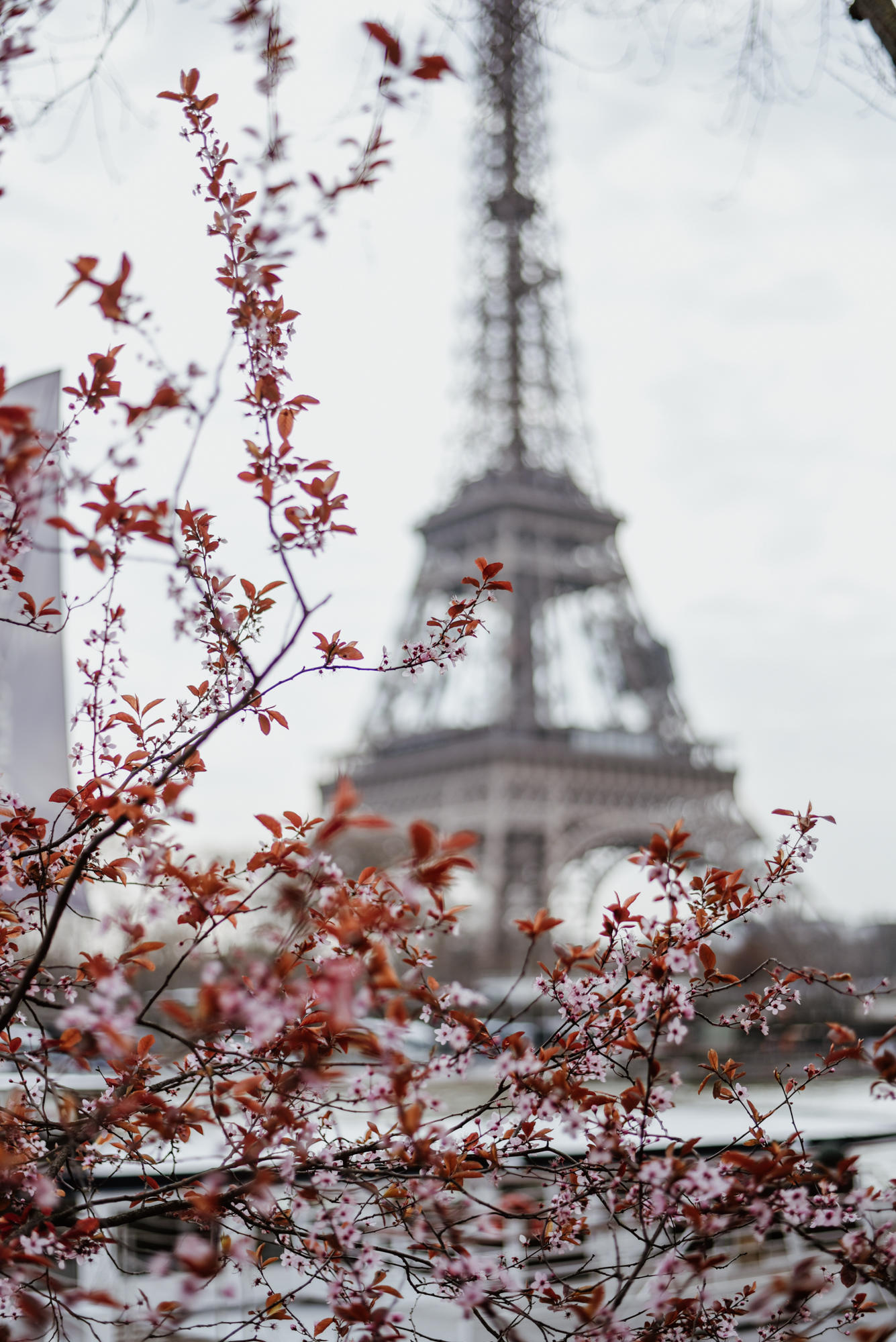 eifel tower with blossoms